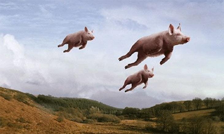 pigsflying
