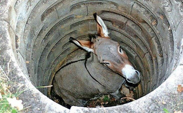 donkeyhole