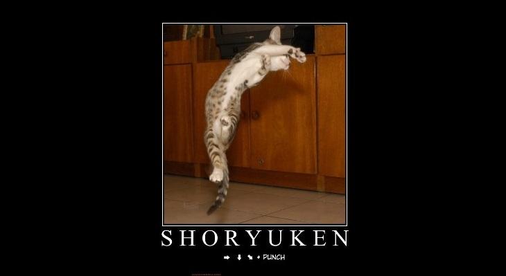 Shoryuken cat