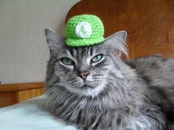 cat-in-luigi-hat