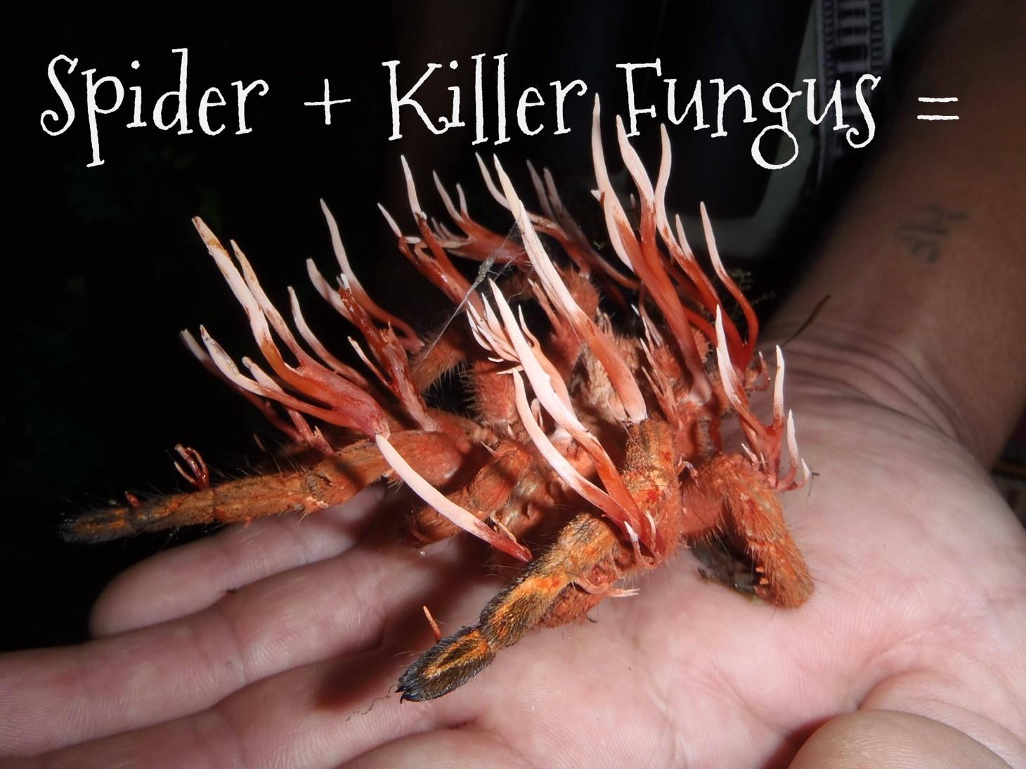 wpid-spider-from-hell.jpg