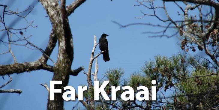 FarKraai.jpg