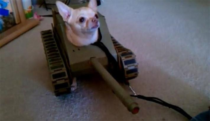 tankdog.jpg