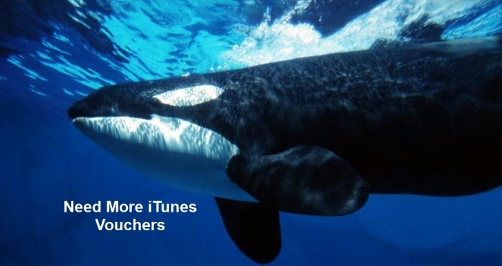 whaleheader.jpg
