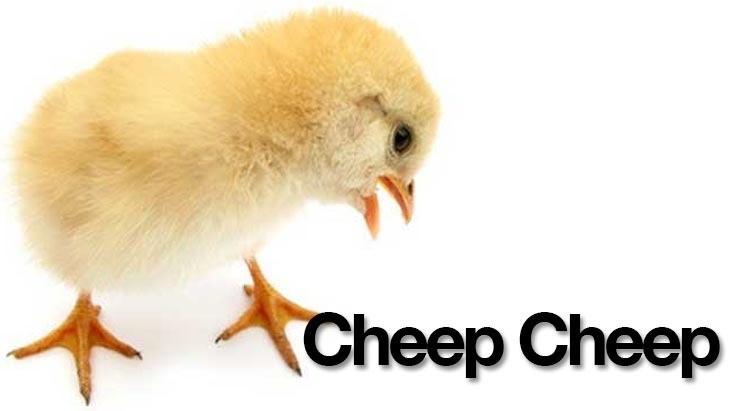 Cheep.jpg