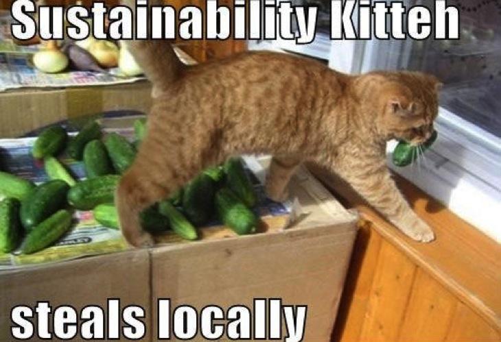 Sustainability kitty