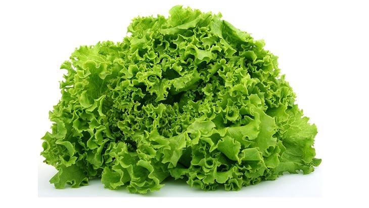 lettucealllaugh.jpg