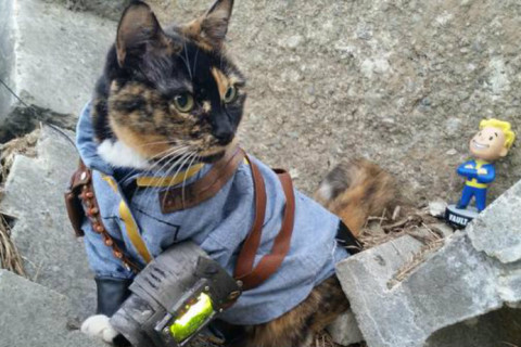 fallout-kitty.jpg