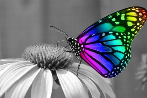 rainbow-butterfly-effect.jpg
