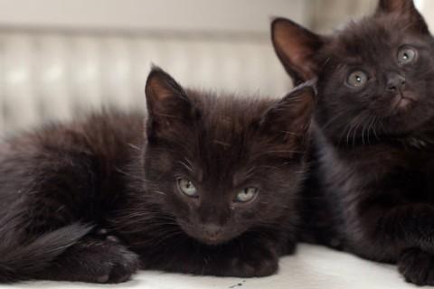 black-cats.jpg