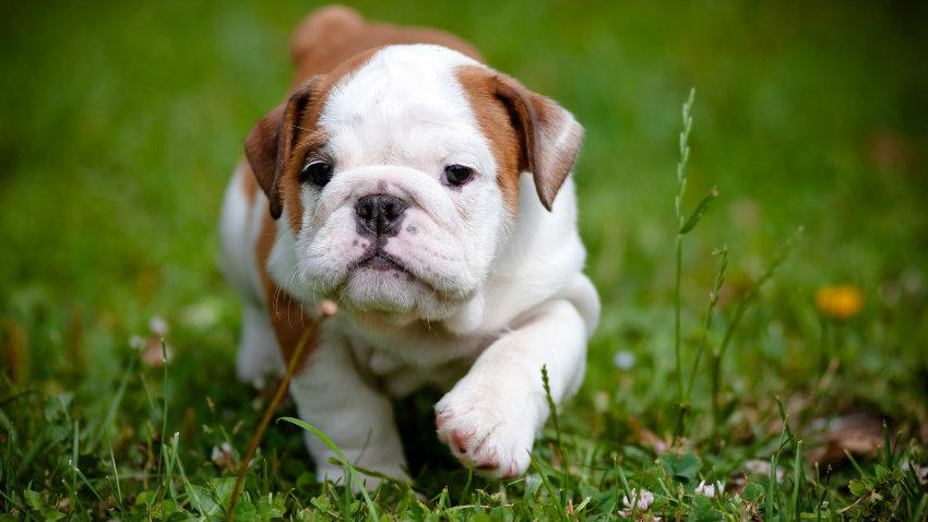 Cute puppy field